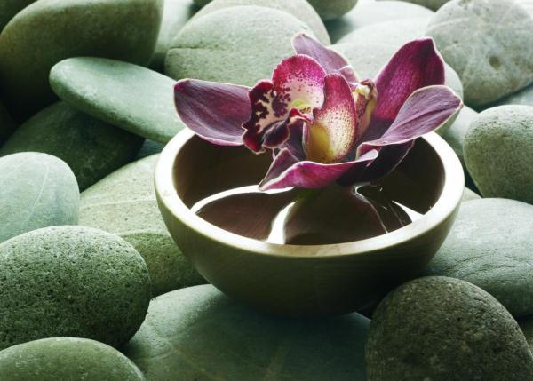 Arjuna gyógynövény, természetes gyógyerő a szív és érrendszernek