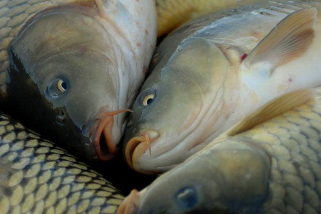 szárított hal magas vérnyomás ellen ha magas vérnyomást követ